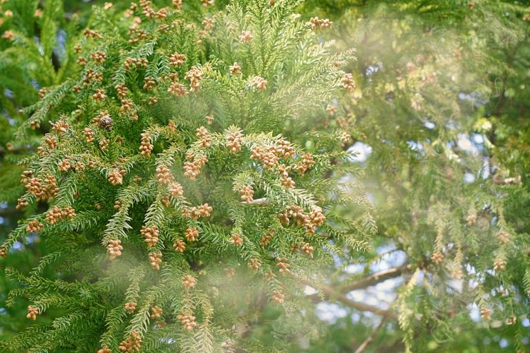 花粉の飛散時期について